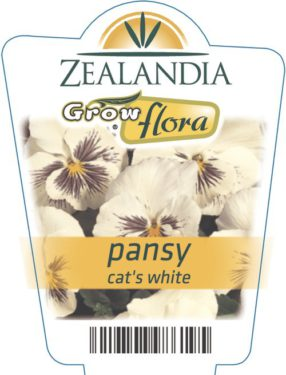 Pansy Cat's White