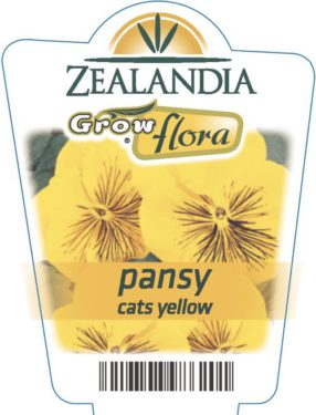 Pansy Cats Yellow