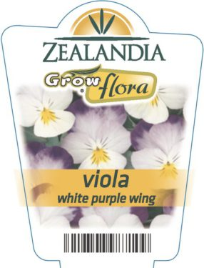 Viola White Purple Wing