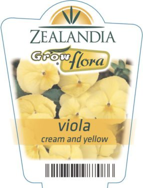Viola Cream And Yellow