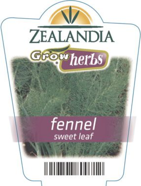 Fennel Sweet Leaf