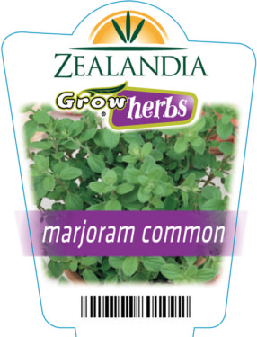 Marjoram Common