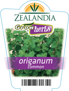 Origanum Common
