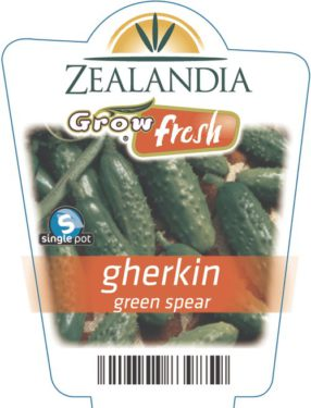 gherkin green spear