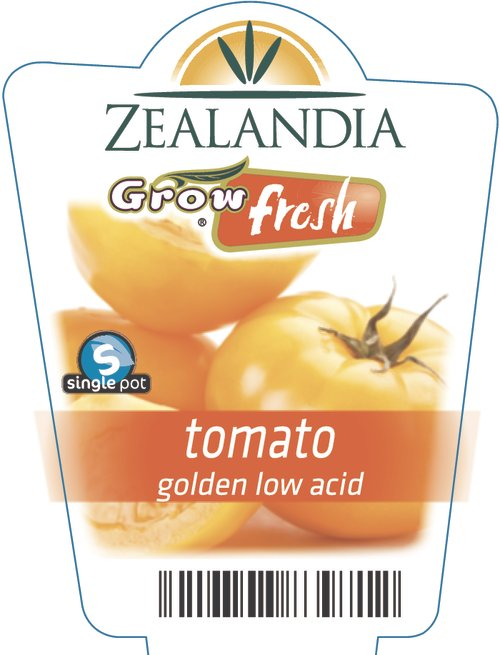 tomato golden low acid