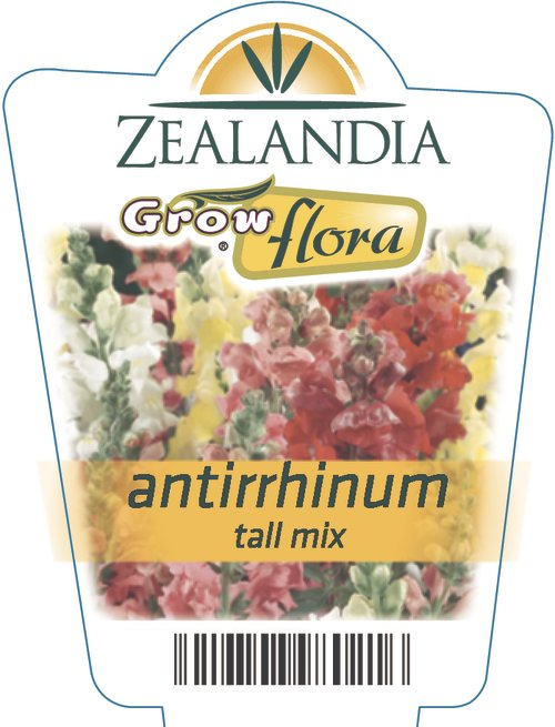 Antirrhinum Tall Mix