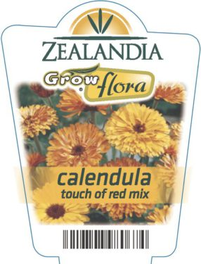 Calendula Touch Of Red Mix