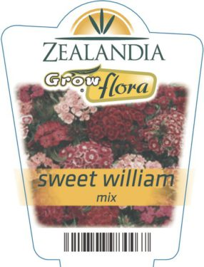 Sweet William Mix