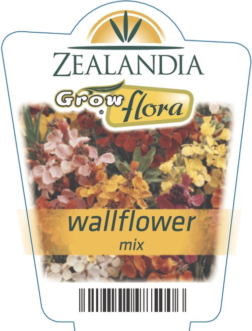 Wallflower Mix