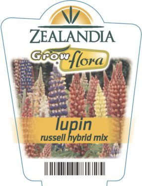 Lupin Russell Hybrid Mix