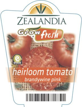 heirloom tomato brandywine pink