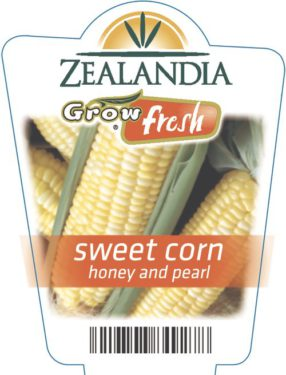 Sweet Corn Honey And Pearl