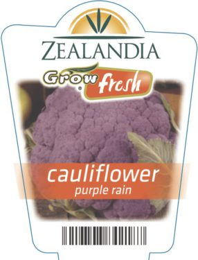 Cauliflower Purple Rain