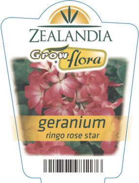 Geranium Ringo Rose Star