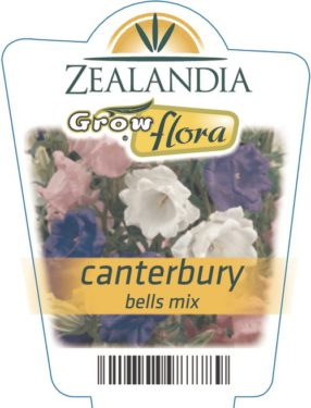Canterbury Bells Mix