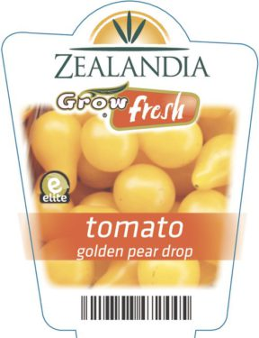 tomato golden pear drop