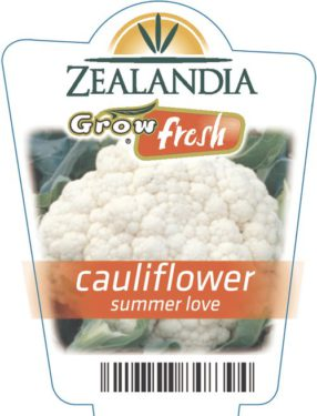 Cauliflower Summer Love