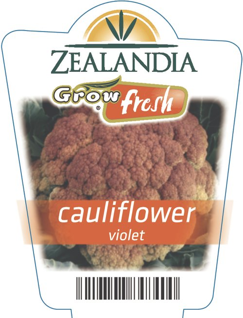 Cauliflower Violet