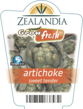 artichoke sweet tender