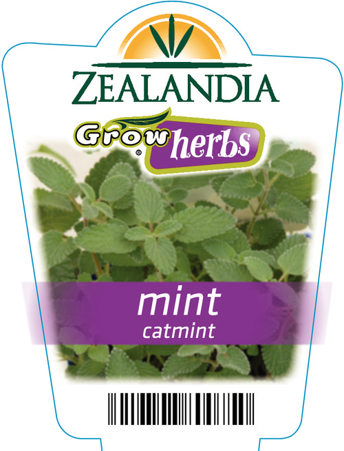 Mint Catmint