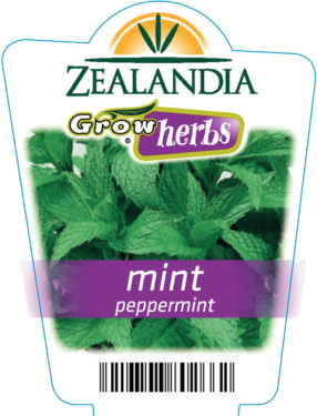 Mint Peppermint