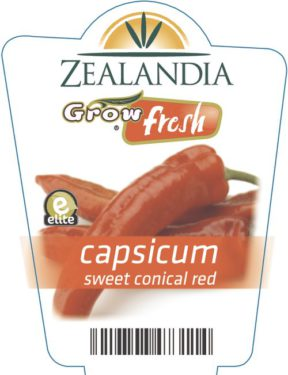 capsicum sweet conical red