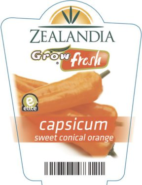 Capsicum Sweet Conical Orange
