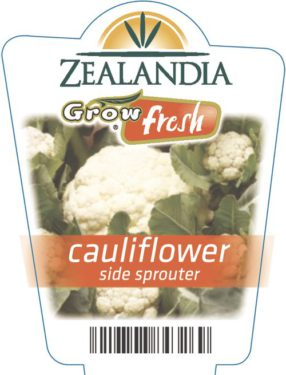 Cauliflower Side Sprouter