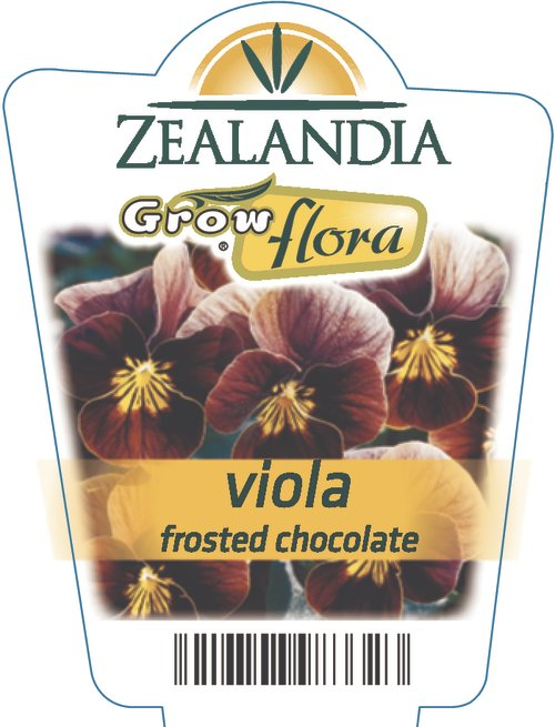 Viola Frosted Chocolate
