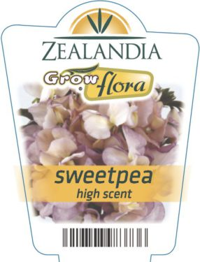 Sweetpea High Scent