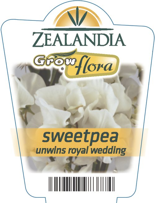 Sweetpea Unwins Royal Wedding
