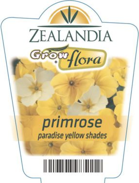 Primrose Paradise Yellow Shades