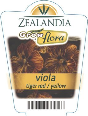 Viola Tiger Red / Yellow