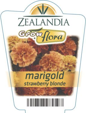 Marigold Strawberry Blonde